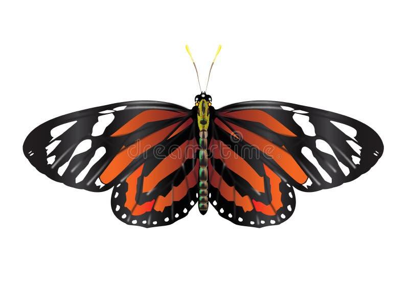 AMonarch motyl z otwartymi skrzydłami fotografia stock