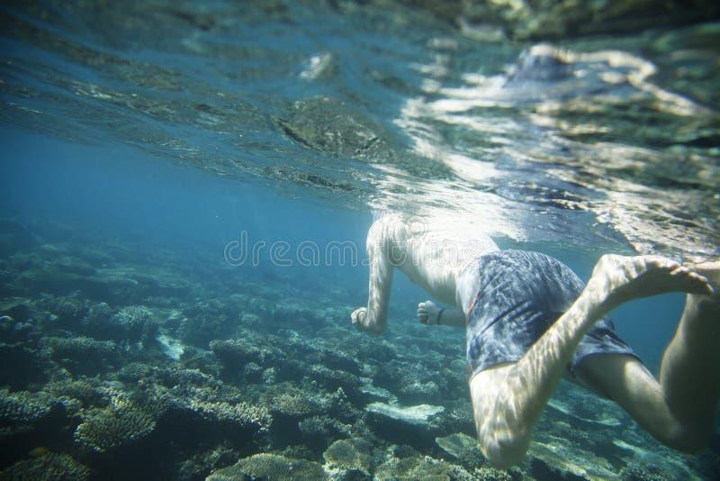 amongst koraller royaltyfri bild