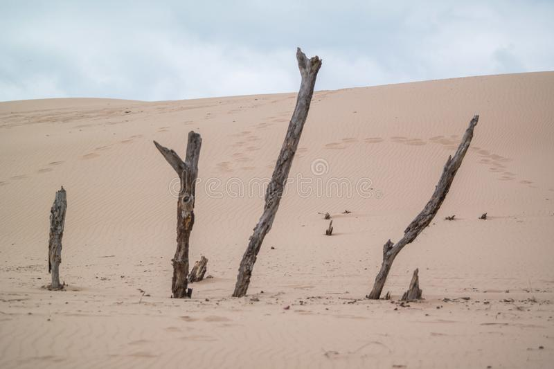 Driftwood sticks out in the sand dunes stock images