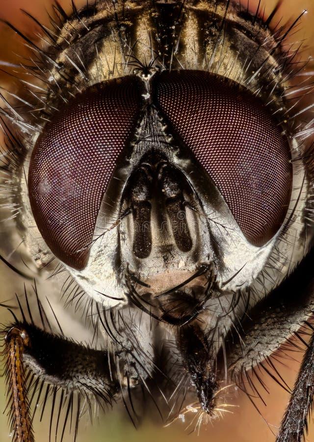 Amontonamiento del foco - mosca, moscas foto de archivo