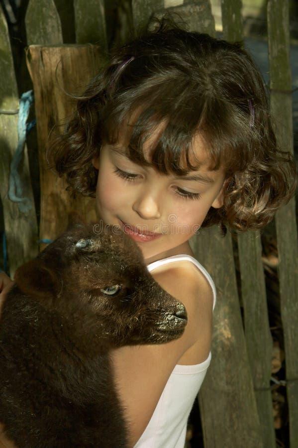 Amor animal foto de archivo