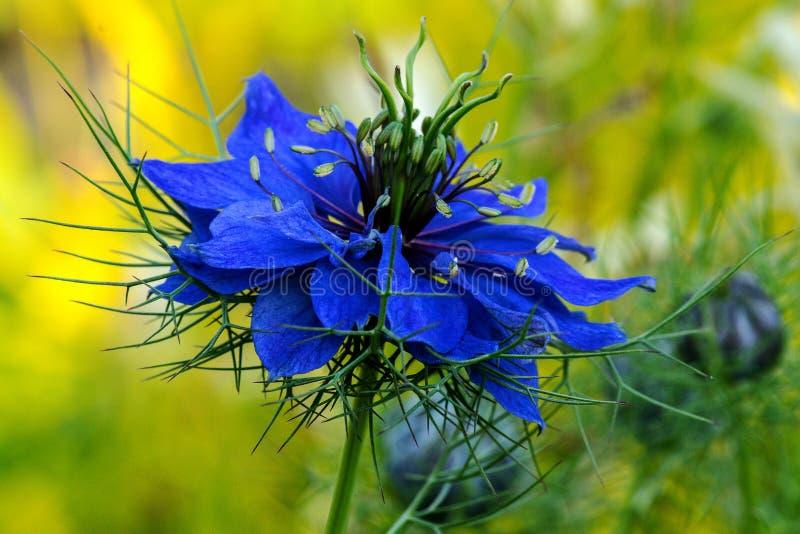 Amor azul na névoa imagens de stock royalty free