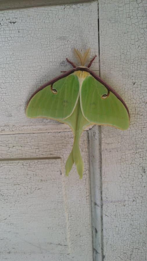 Amor bonito do verde da natureza era tão grande quanto minha mão fotos de stock royalty free