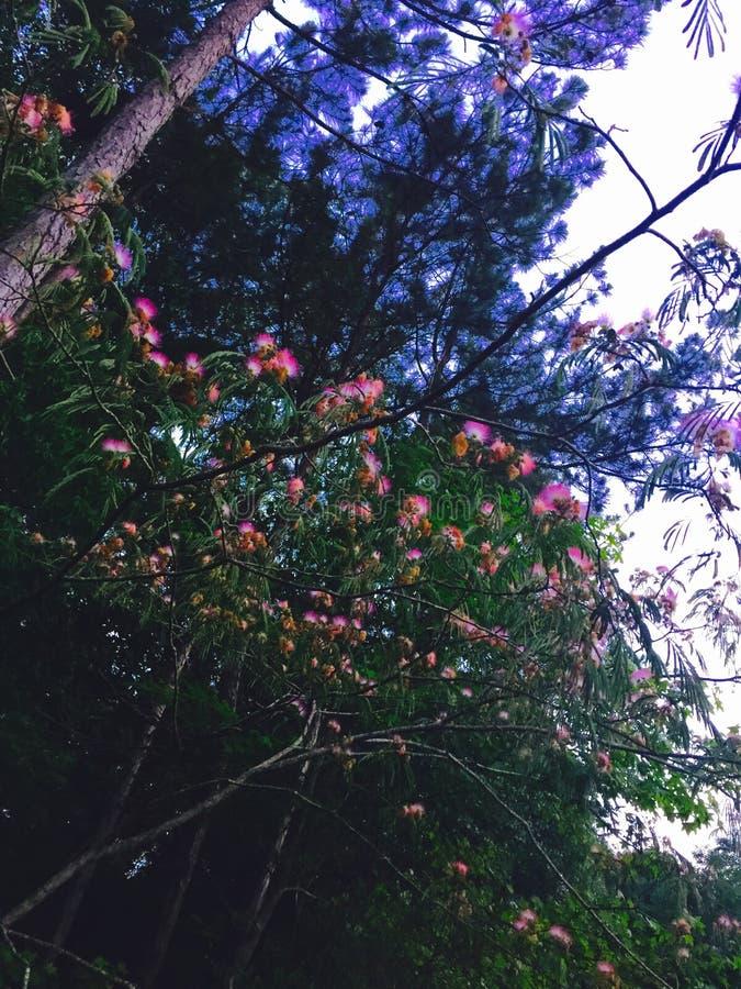Amor como uma árvore imagens de stock