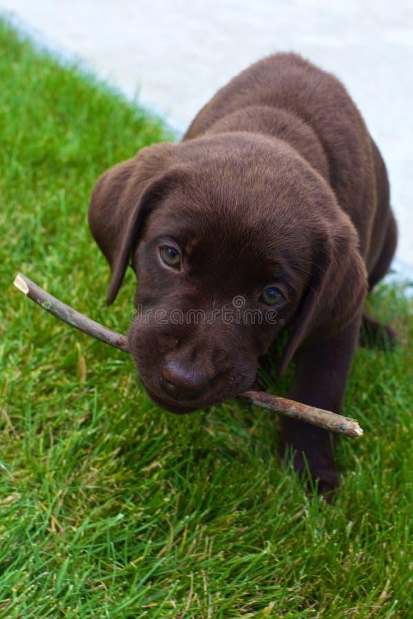 Amor de cachorrinho foto de stock royalty free