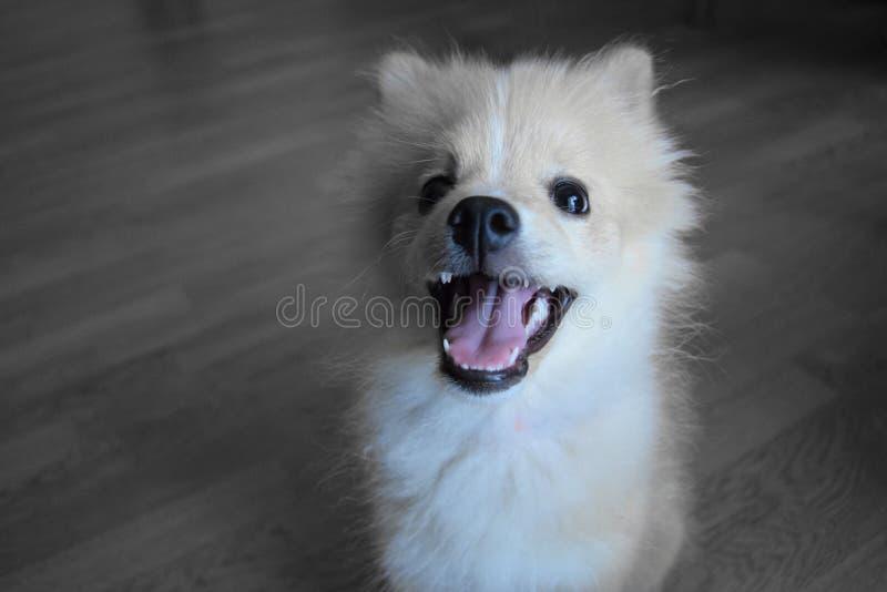 Amor de cachorrinho fotografia de stock royalty free