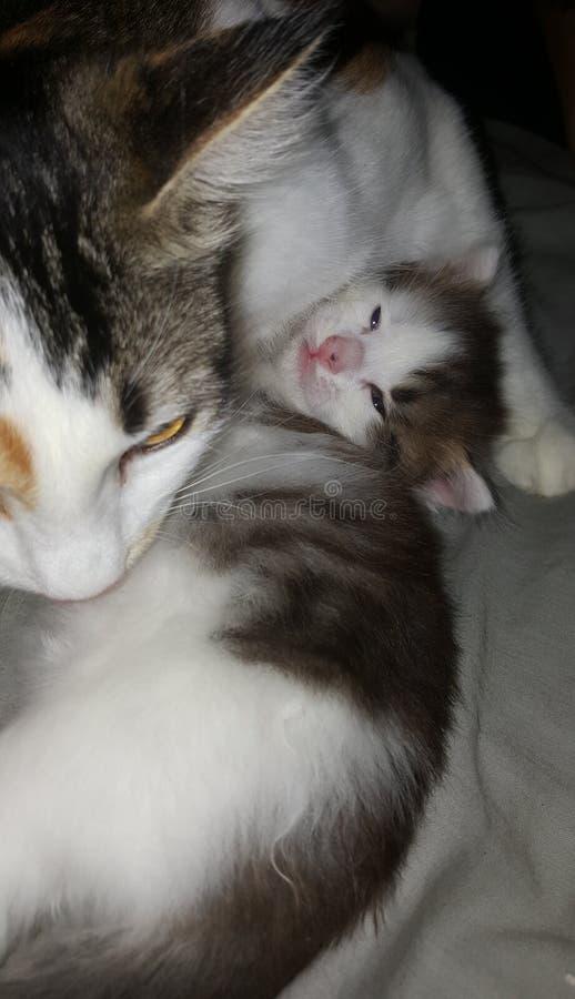 Amor de la madre y de los hijos fotografía de archivo libre de regalías