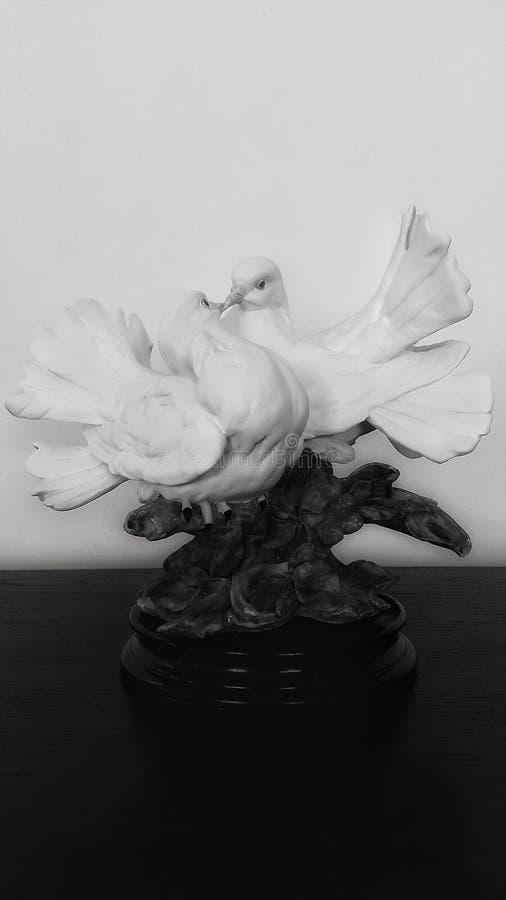Amor de la paloma imagen de archivo libre de regalías