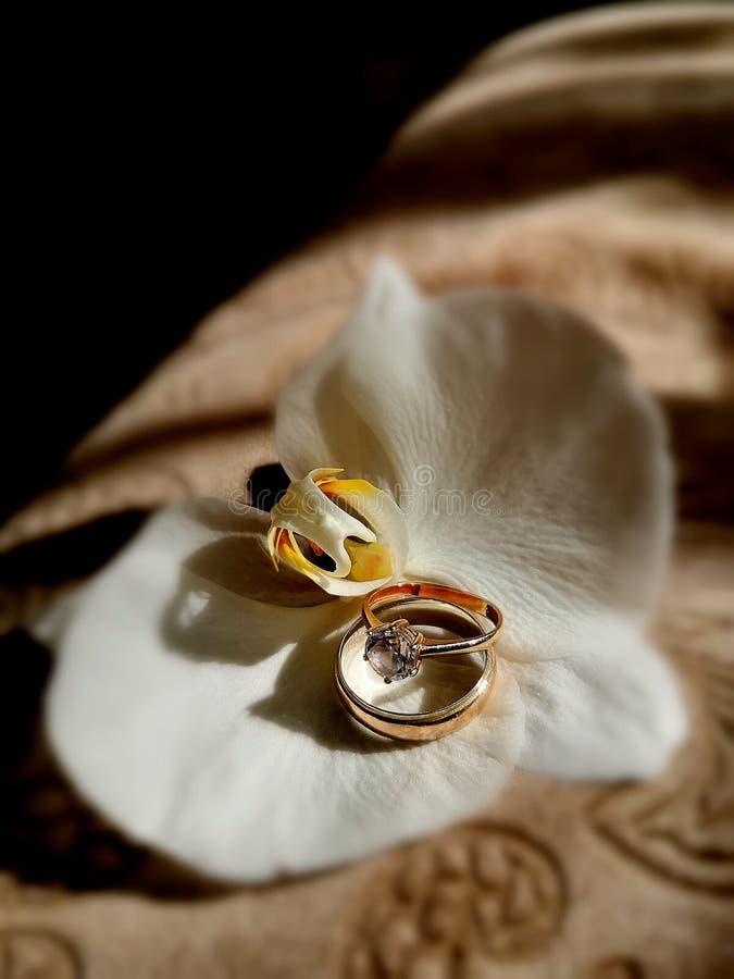 Amor de los anillos de bodas del prometido y foto de archivo