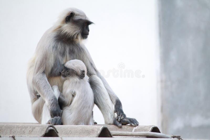 Amor de mães imagens de stock
