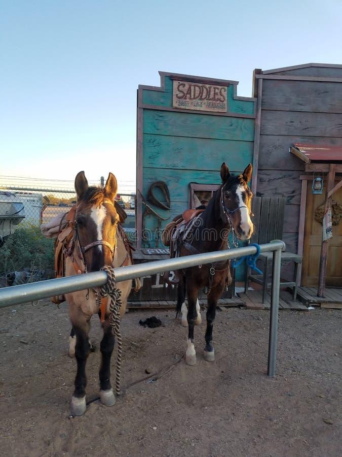 Amor del caballo fotos de archivo libres de regalías