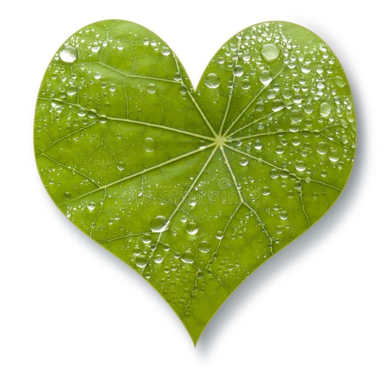 Amor del corazón de la hoja imagenes de archivo