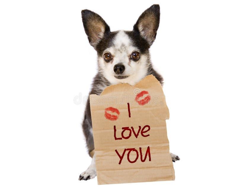 Amor del perro de la tarjeta del día de San Valentín imagen de archivo
