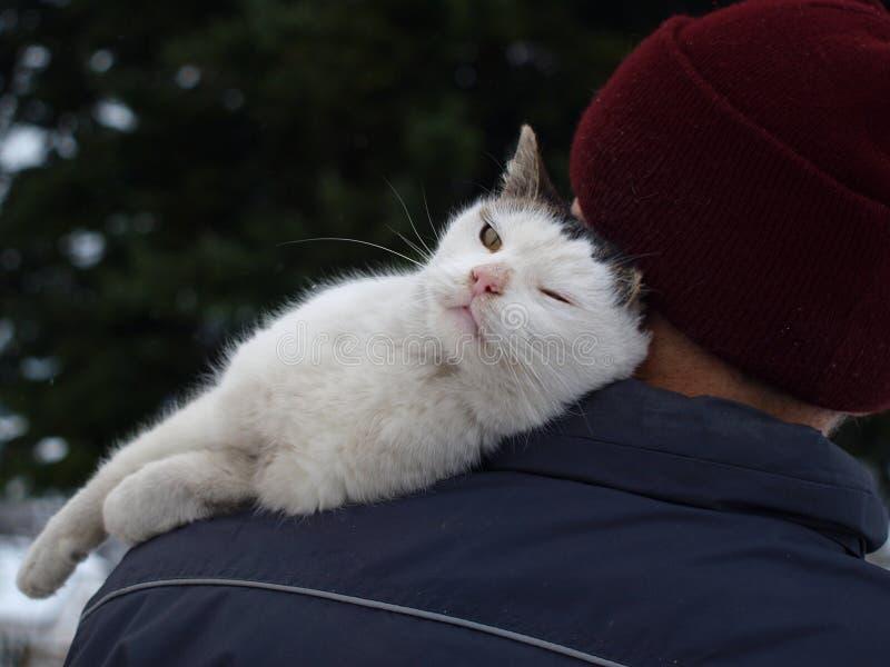 Amor do gato fotografia de stock