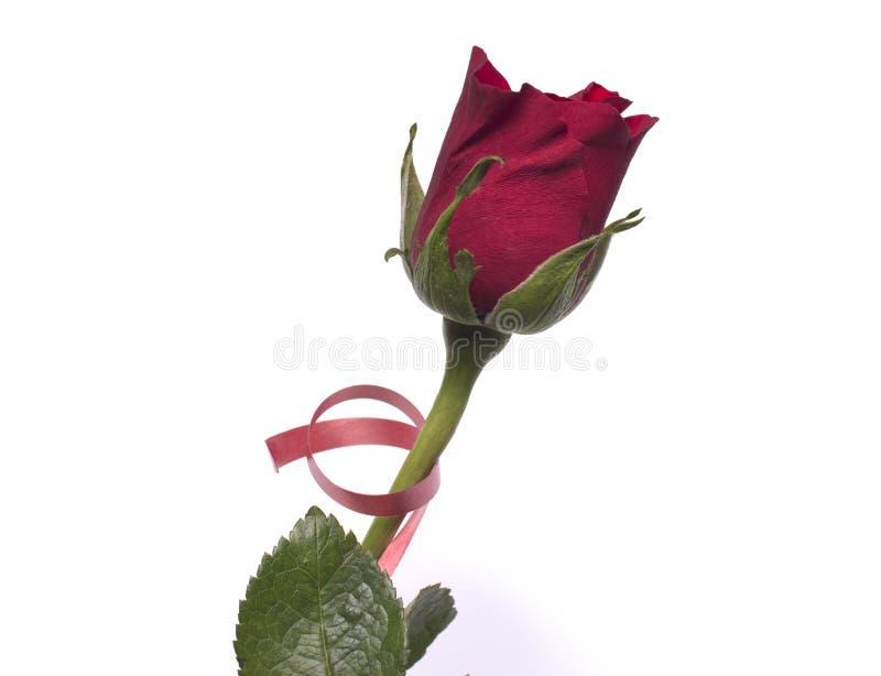Amor El rojo se levantó imagen de archivo libre de regalías