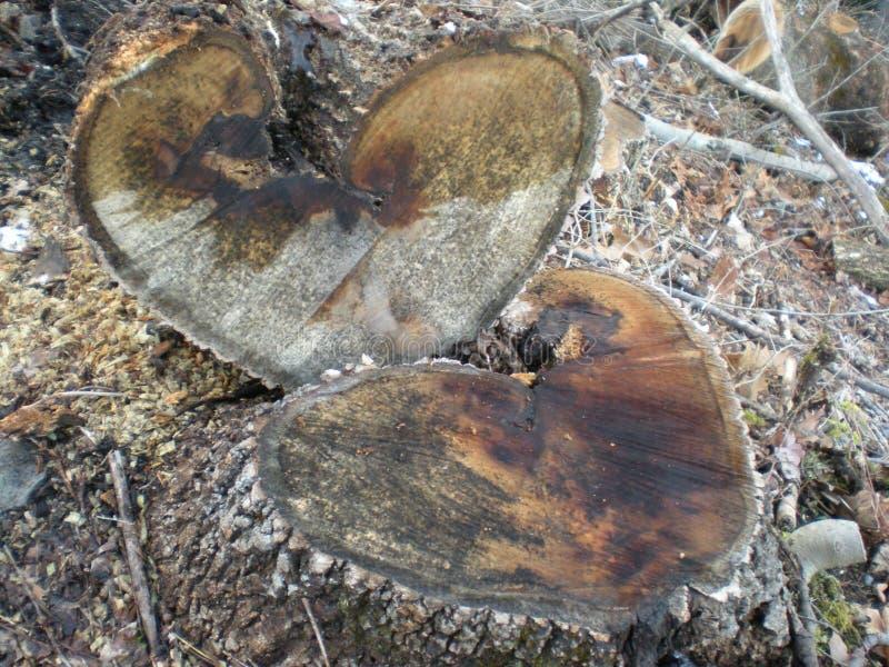 Amor en naturaleza imágenes de archivo libres de regalías