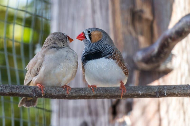 Amor entre 2 pássaros fotografia de stock