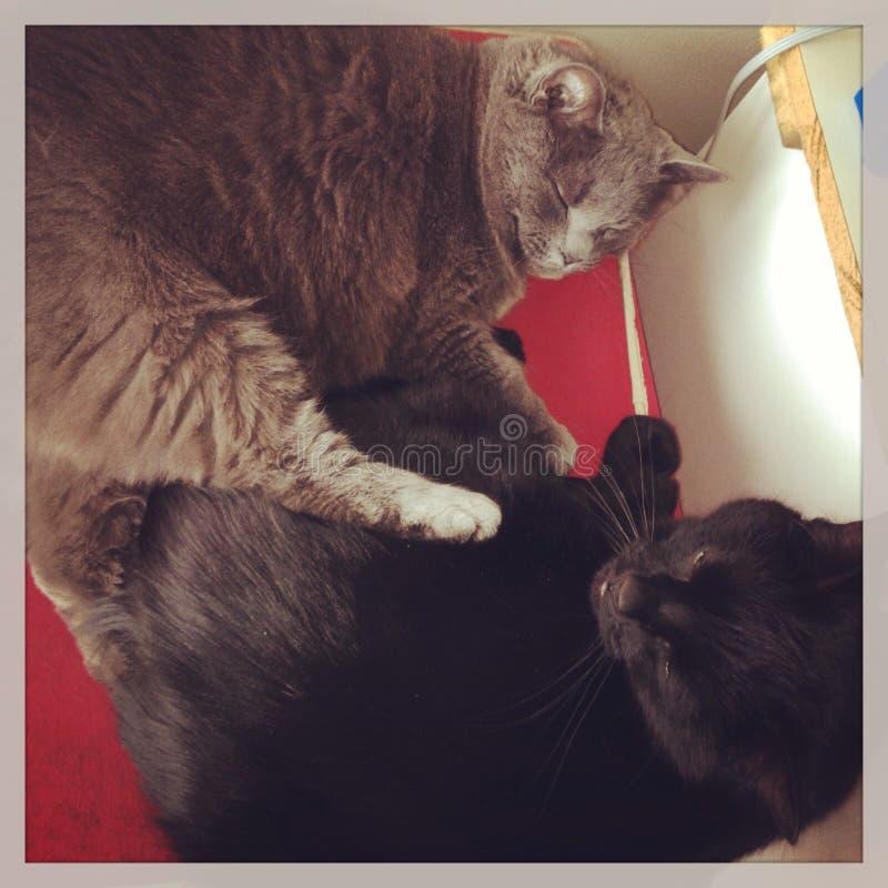 Amor fraternal fotografía de archivo
