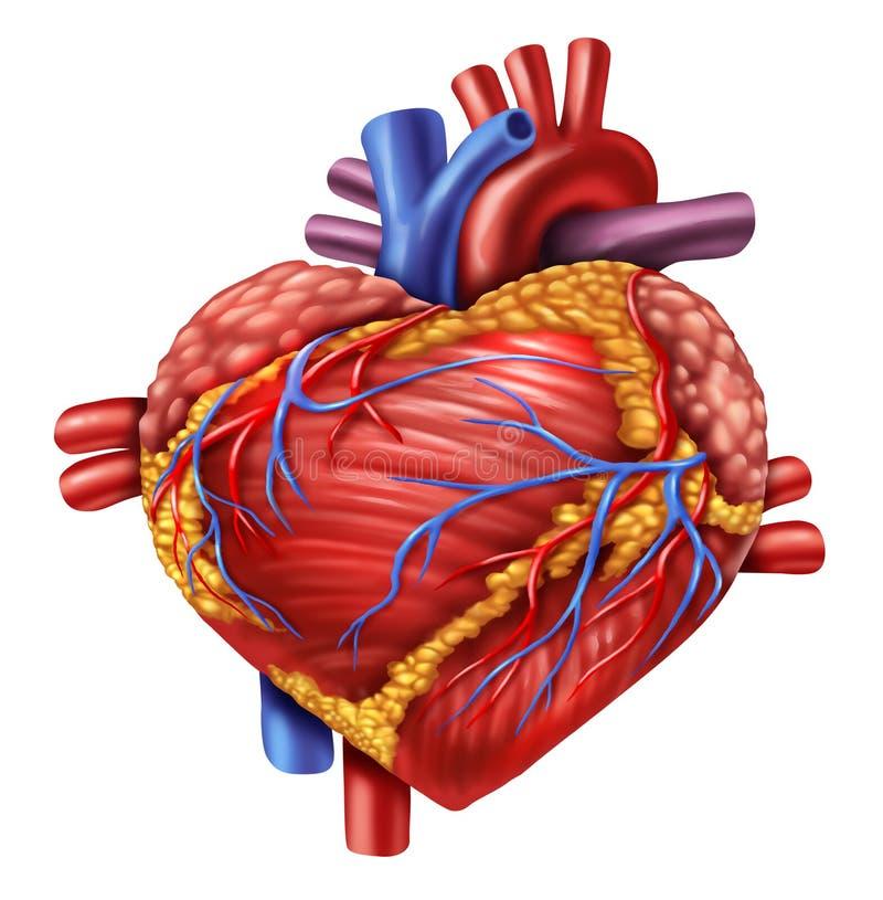 Amor humano del corazón stock de ilustración