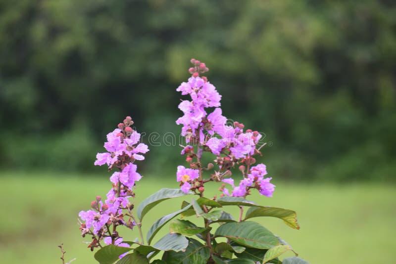 Amor maduro de la selva del bosque de la flor fotografía de archivo