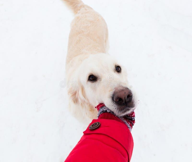 Amor para animais de estimação - selfie-retrato de um cão grande bonito em uma caminhada do inverno fotos de stock royalty free