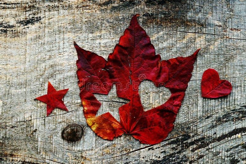 Amor para o outono Flocos de neve no outono imagem de stock royalty free