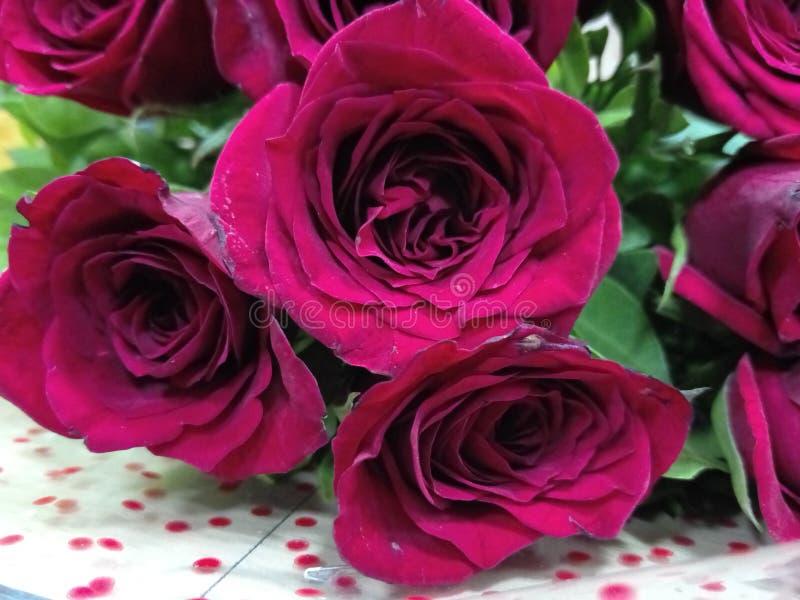 Amor rojo Rosas rojas imagen de archivo libre de regalías