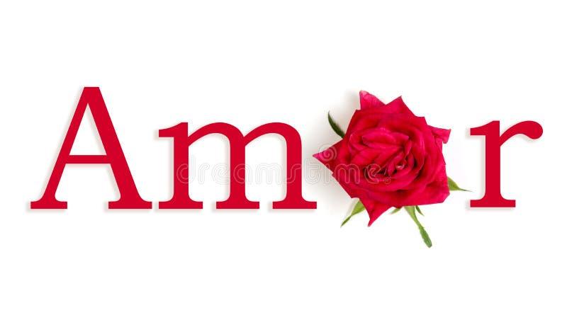 Amor rosa foto de stock royalty free
