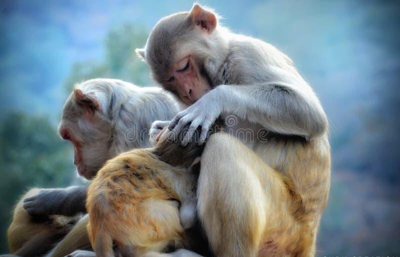 Amor y afecto del niño de la madre de los monos fotos de archivo