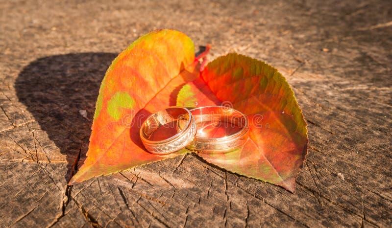 Amor y lealtad Anillos de bodas hermosos imagen de archivo libre de regalías