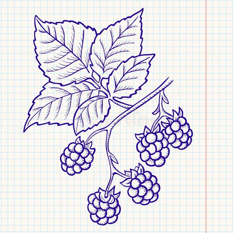 Amora-preta do Doodle ilustração do vetor