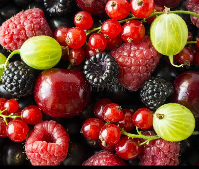 Amoras-pretas maduras, groselhas, cerejas, corintos vermelhos, framboesas e groselhas Bagas e frutos da mistura fotos de stock