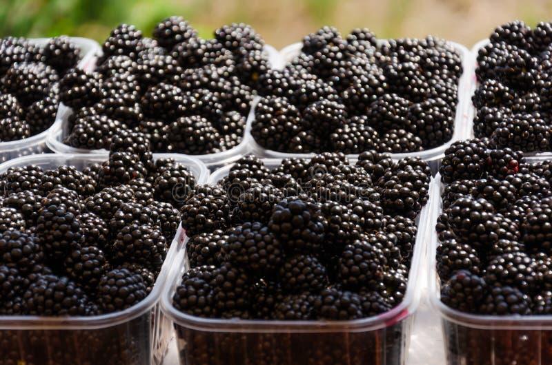 Amoras-pretas suculentas maduras em uns recipientes plásticos na tenda do mercado Bagas orgânicas frescas do ecofarm imagens de stock royalty free