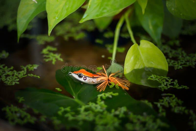 Amorce de grenouille photographie stock libre de droits