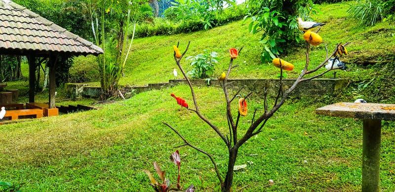 Amorce de nourriture pour oiseaux sur un arbre au parc d'oiseau de kilolitre photo libre de droits