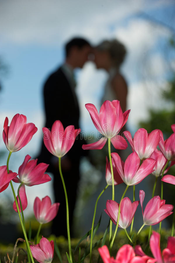 Amore del tulipano fotografia stock