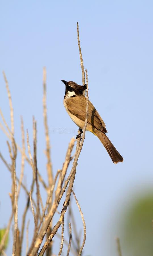 Amore dell'uccello fotografia stock libera da diritti
