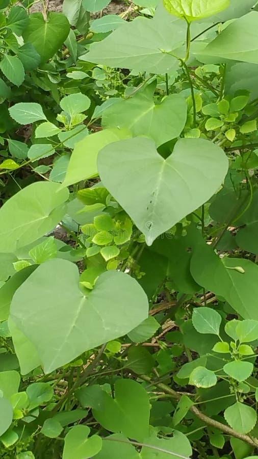 Amore della foresta in Africa immagini stock