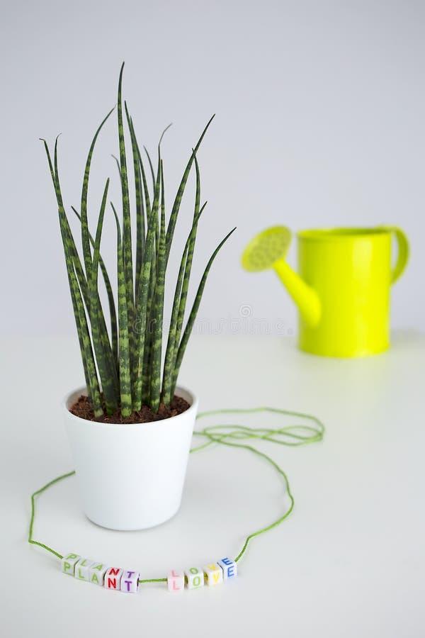 Amore della pianta con l'iscrizione colourful della pianta da vaso ed acqua verde immagini stock