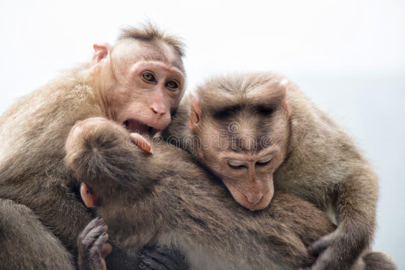 Amore della scimmia immagine stock libera da diritti