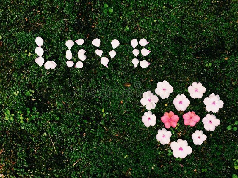 Amore e cuore del fiore fotografia stock