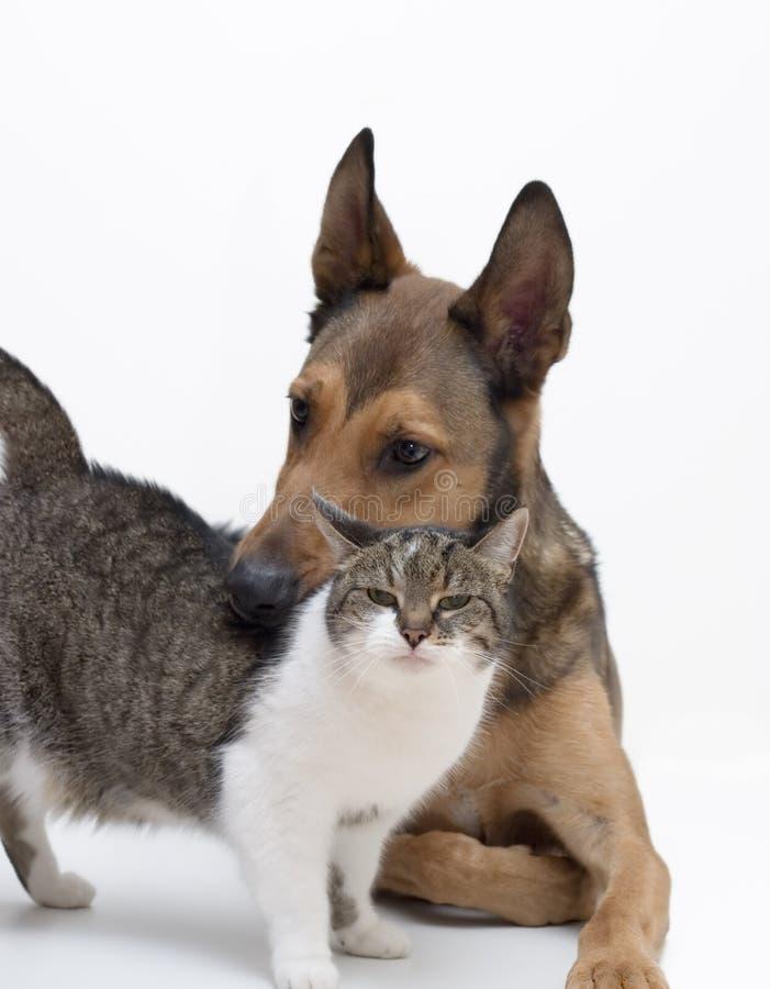 Amore fra il cane & il gatto fotografie stock libere da diritti