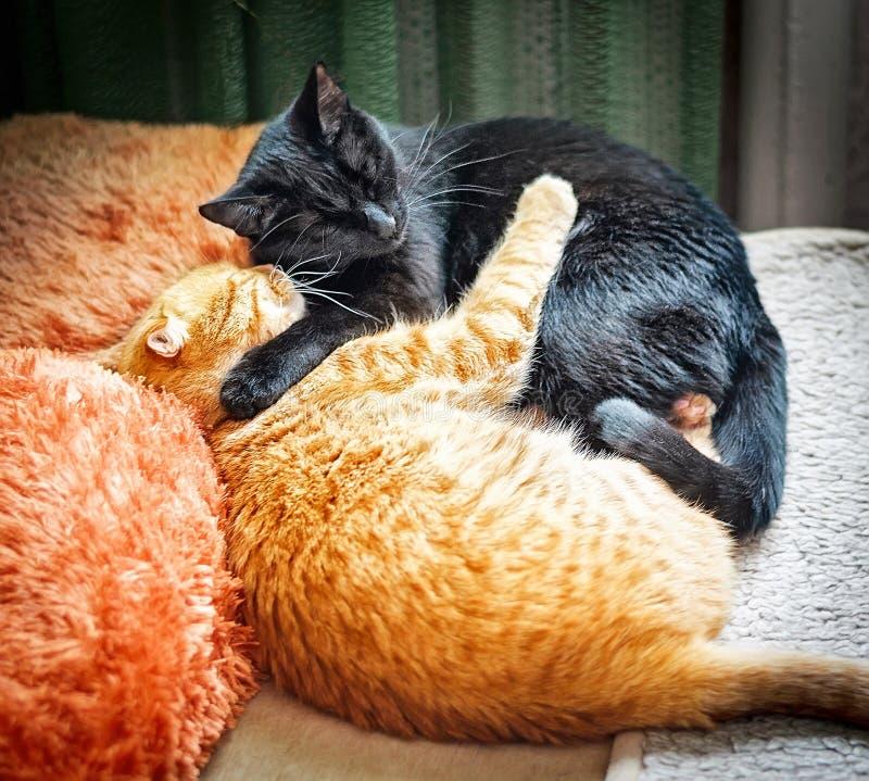 Amore fraterno felino abbracciare i gatti rossi e neri fotografia stock libera da diritti