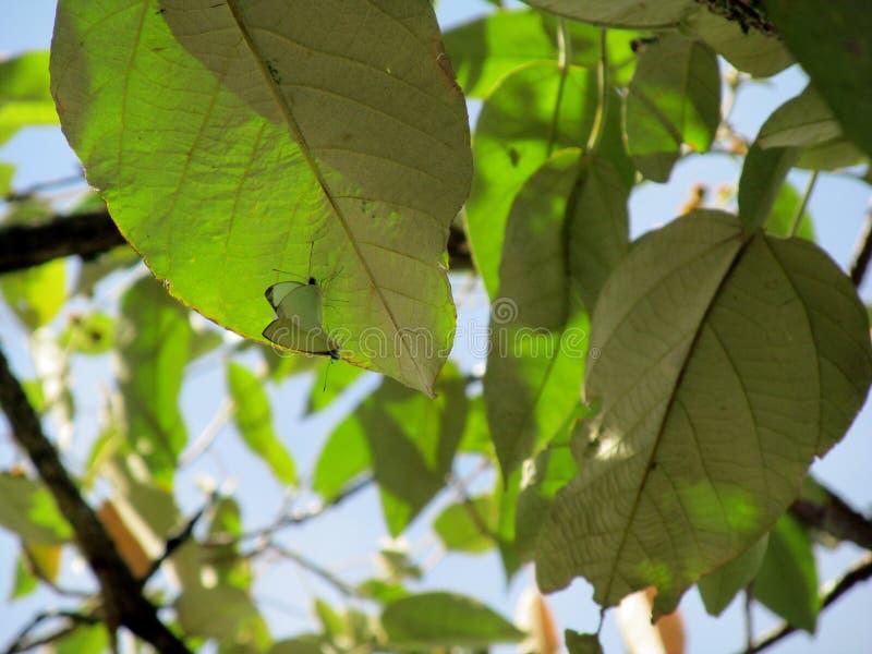 Amore verde fotografia stock libera da diritti
