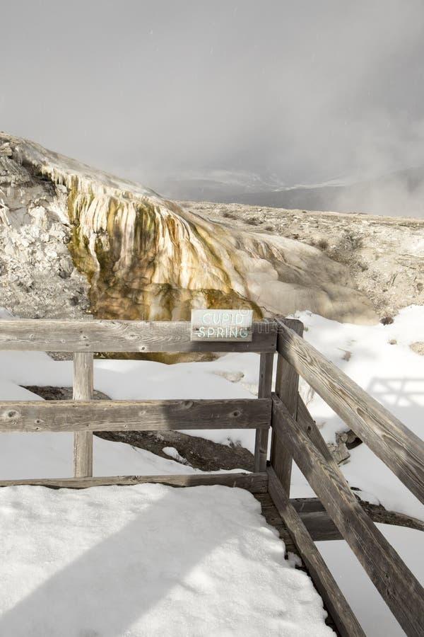 Amorek wiosna, Mamutowe Gorące wiosny, Yellowstone park narodowy, Wy obrazy stock