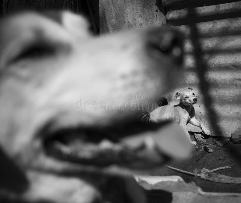 Amores Perros imagen de archivo libre de regalías