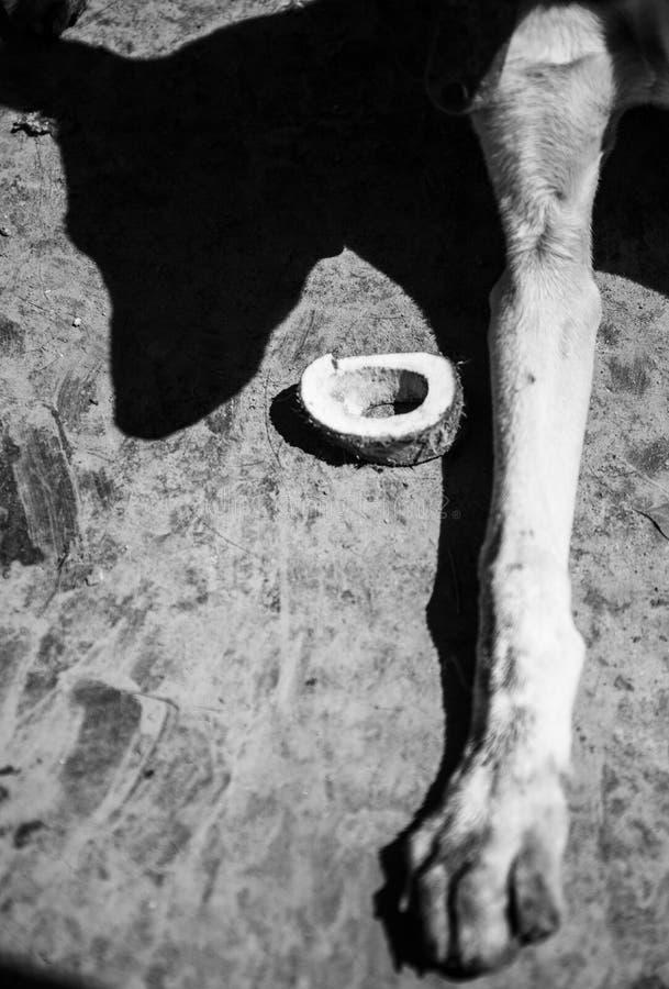 Amores Perros fotografía de archivo libre de regalías
