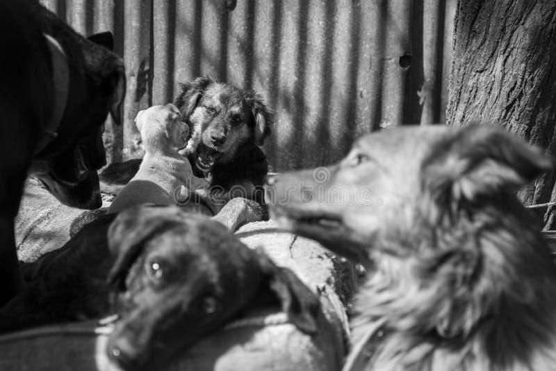 Amores Perros imágenes de archivo libres de regalías