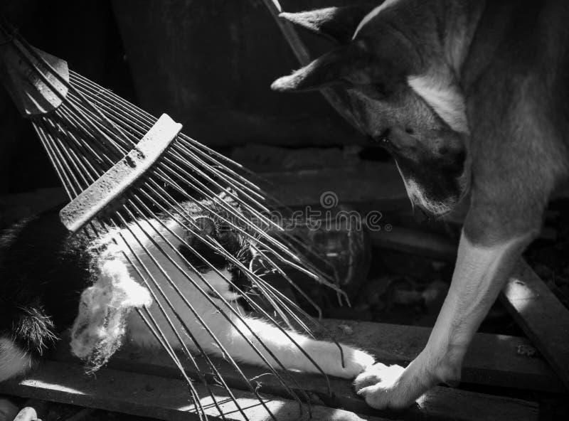 Amores Perros fotos de archivo libres de regalías