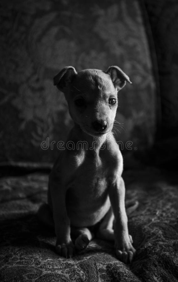 Amores Perros stock foto's